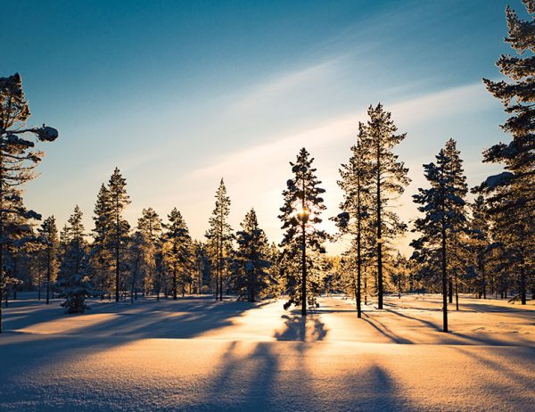 Bild mit Link zum Thema Holz der Polarfichte
